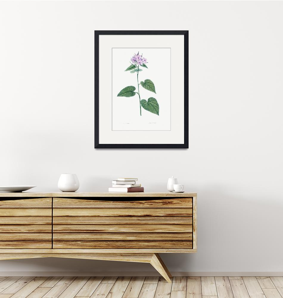 """""""Morning Glory Vintage Botanical""""  by FineArtClassics"""