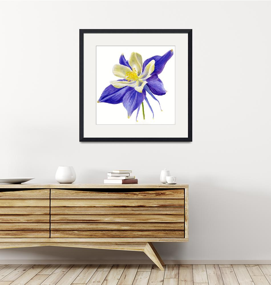 """""""Single Blue Columbine Flower""""  (2015) by Pacific-NW-Watercolors"""
