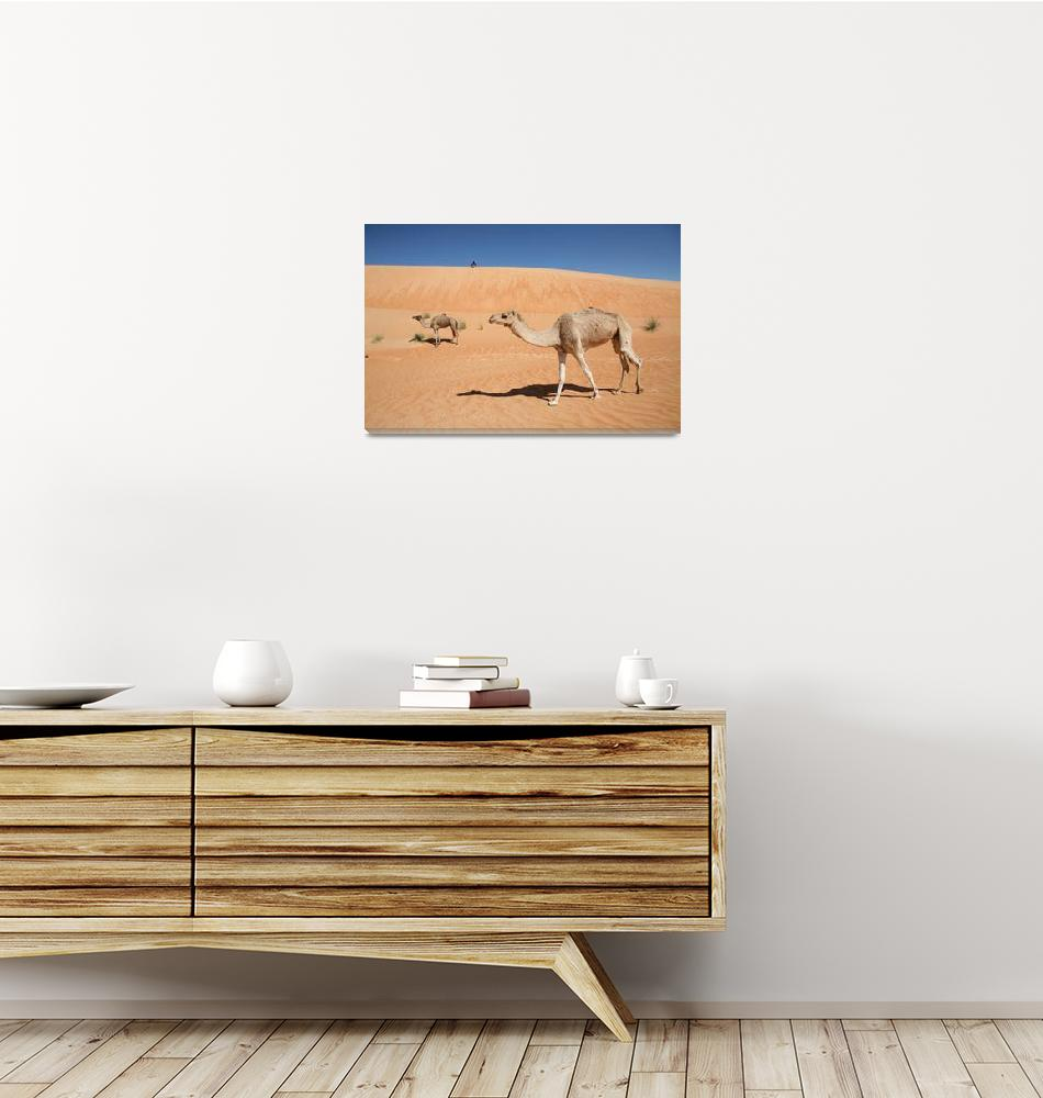 """""""Camel Stroll""""  (2009) by AndreaMoorePhotography"""
