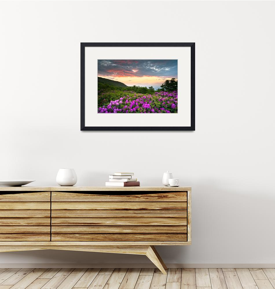 """Craggy Gardens Bloom - Rhododendron at Sunset""  (2011) by DAPhoto"