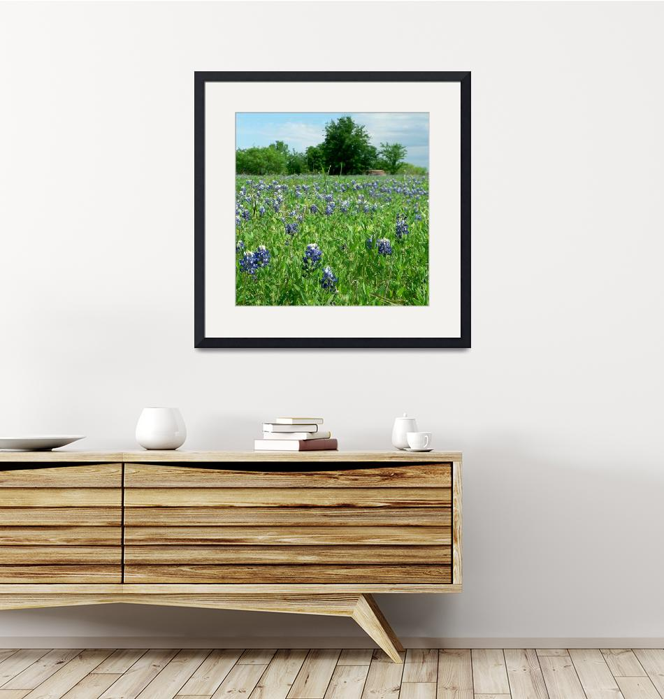 """""""Scenic TX Wildflowers1100063""""  (2010) by rayjacque"""