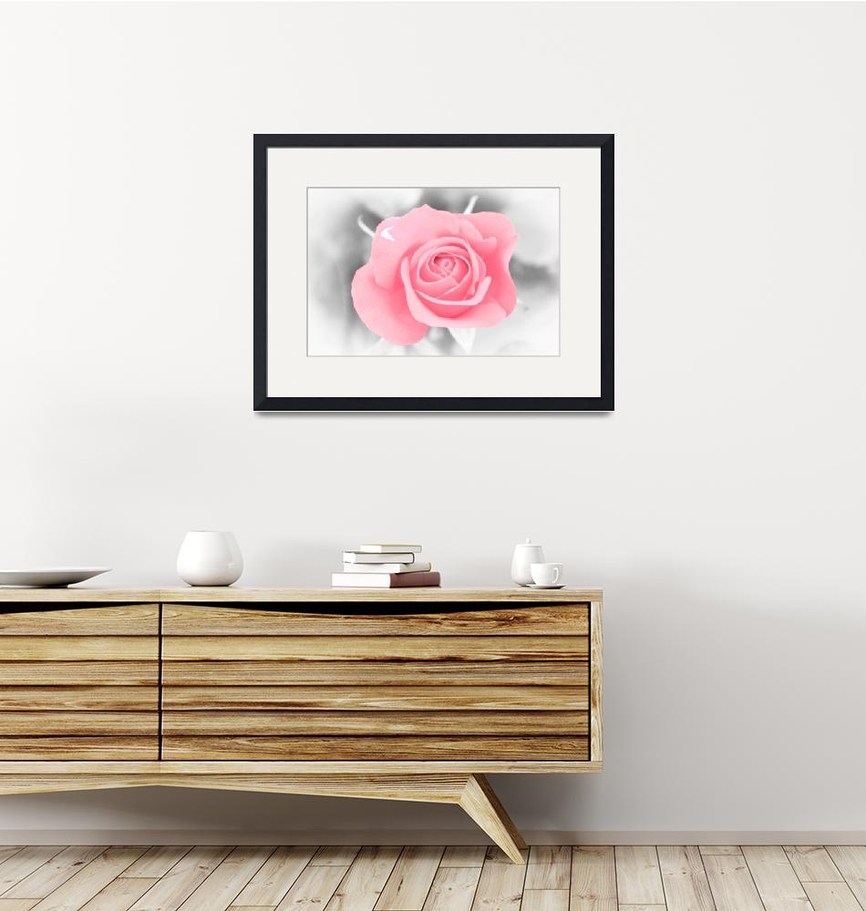 """""""Pink rose on black and white background""""  (2014) by mohler"""