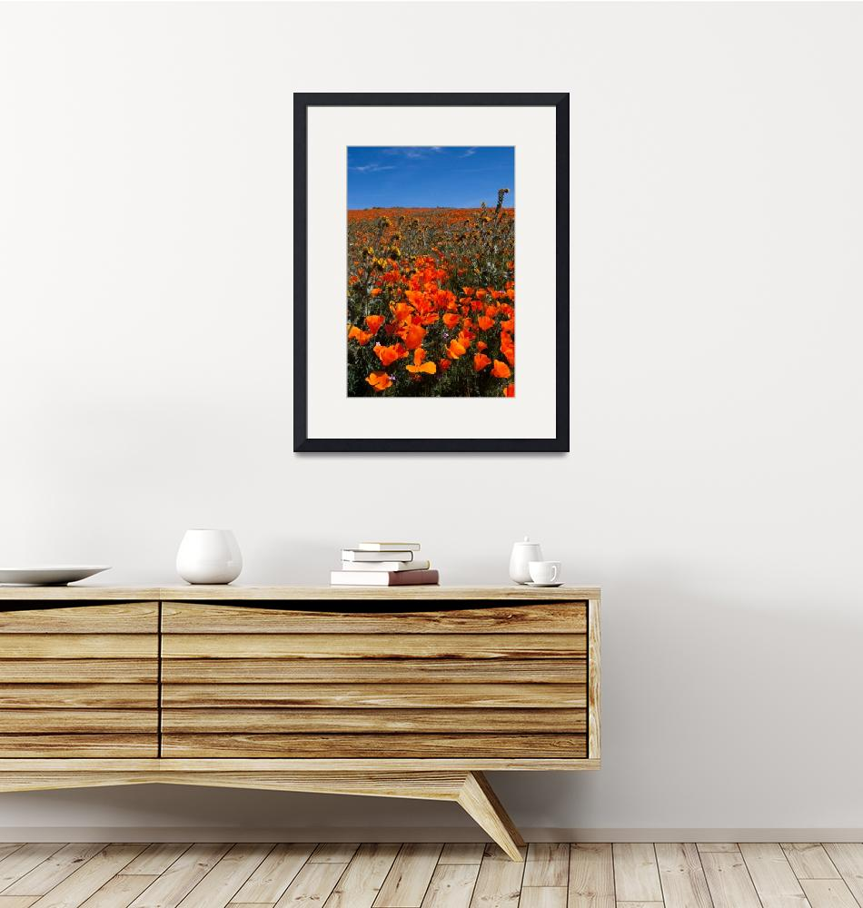 """""""Poppies and Blue Sky""""  (2017) by DustinWoods"""
