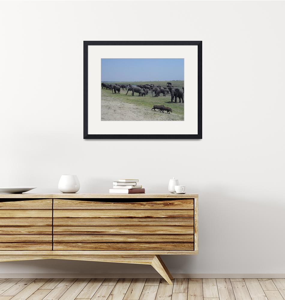 """""""Warthogs on the run""""  (2009) by InspiringImages"""