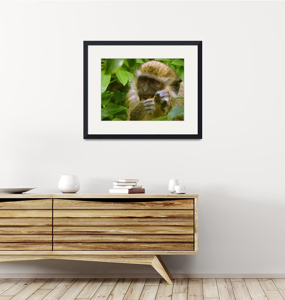 """""""Wild African Green Vervet Monkey Eating""""  (2018) by PixiePea"""