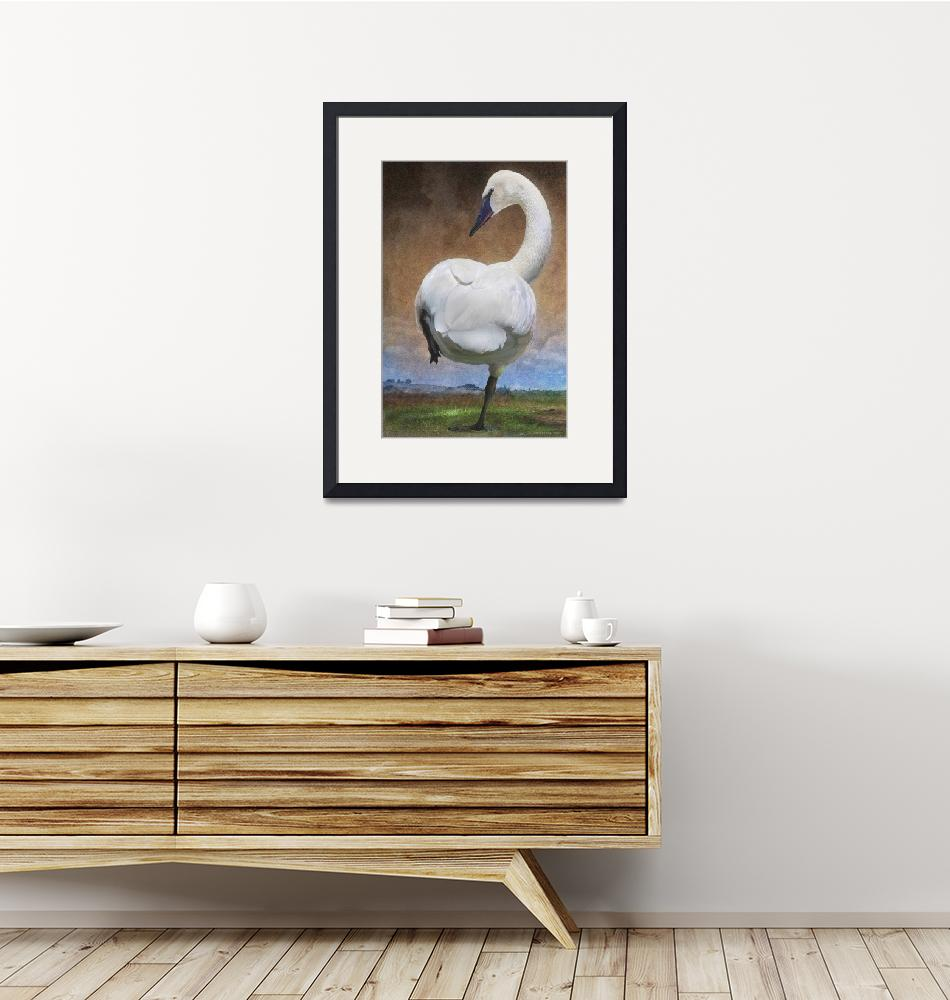"""crossing the great plains - trumpeter swan""  (2011) by rchristophervest"