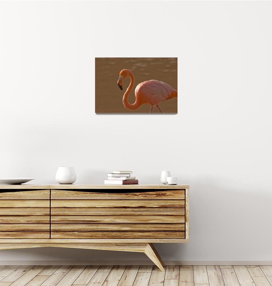 """Flamingo Closeup""  (2010) by SederquistPhotography"