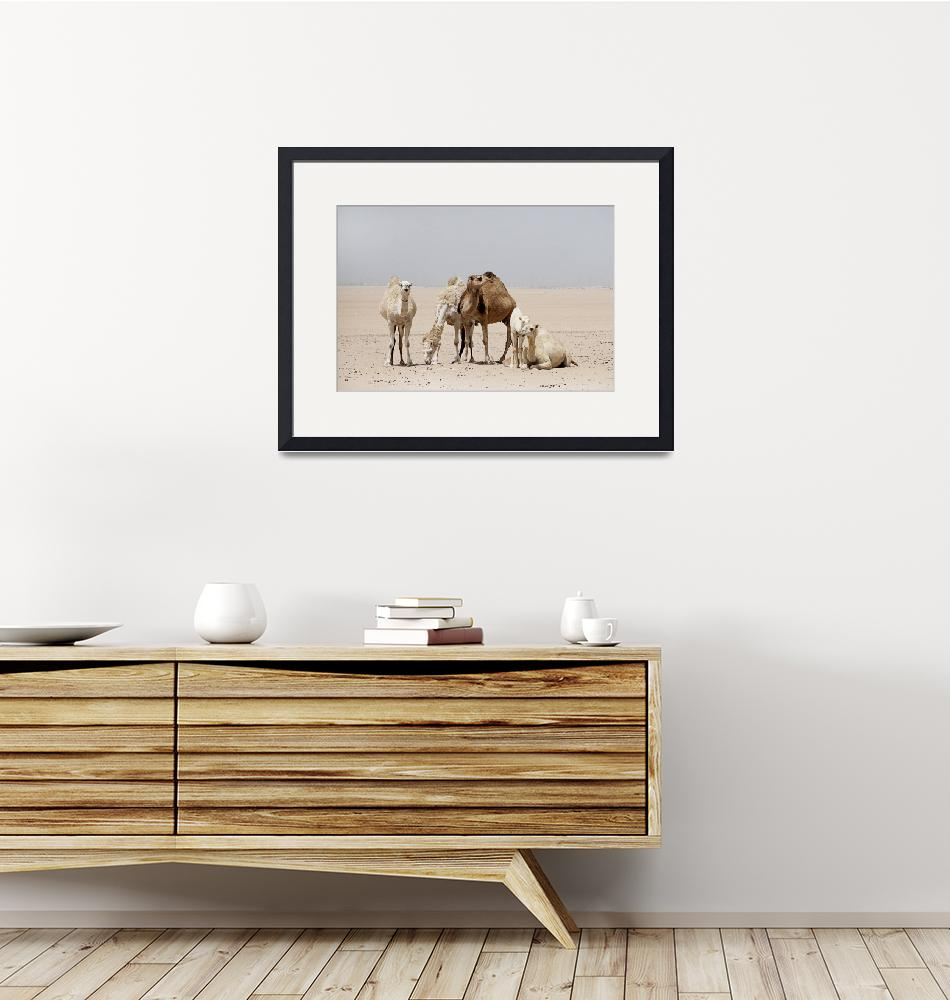 """Camels at Rest""  (2013) by AlexisRosasco"