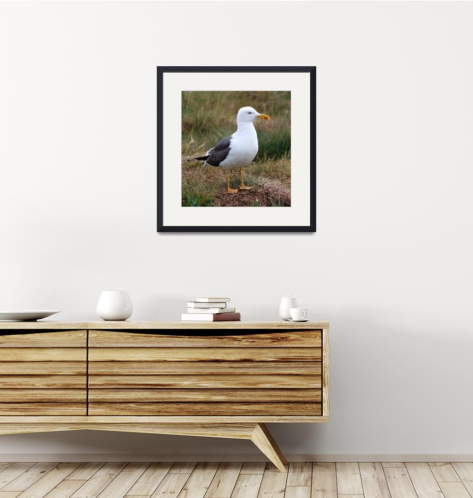 """Lesser black-backed gull""  (2009) by jammyjimbob"