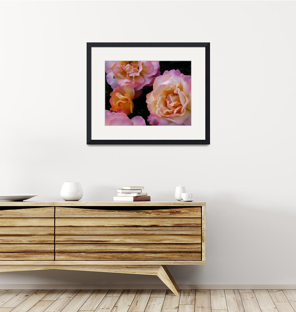"""""""Peach-colored Roses""""  by TheCandidImage"""