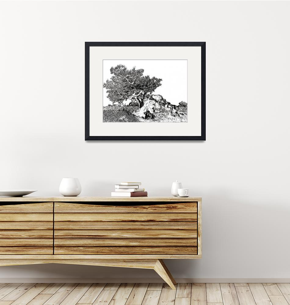 """Torrey pine tree by RD Riccoboni drawing""  (2008) by RDRiccoboni"