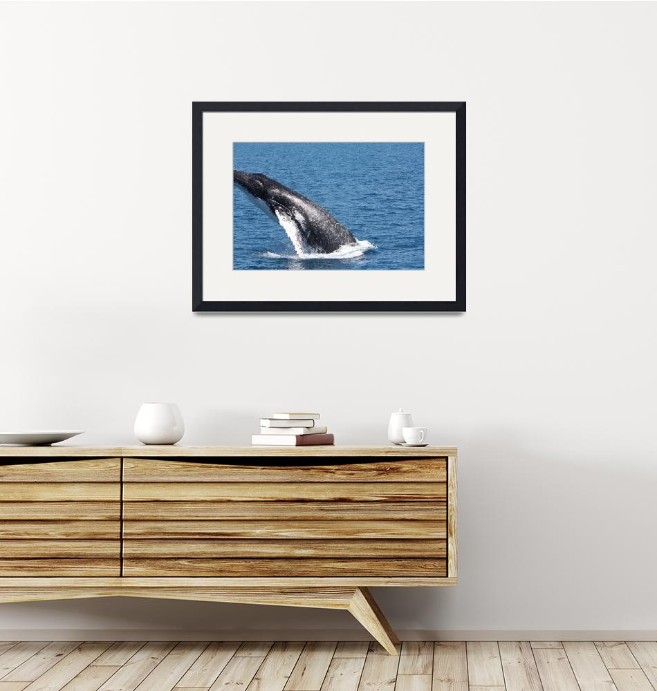 """NaP_ Whale Watching063""  by nevilleprosser"