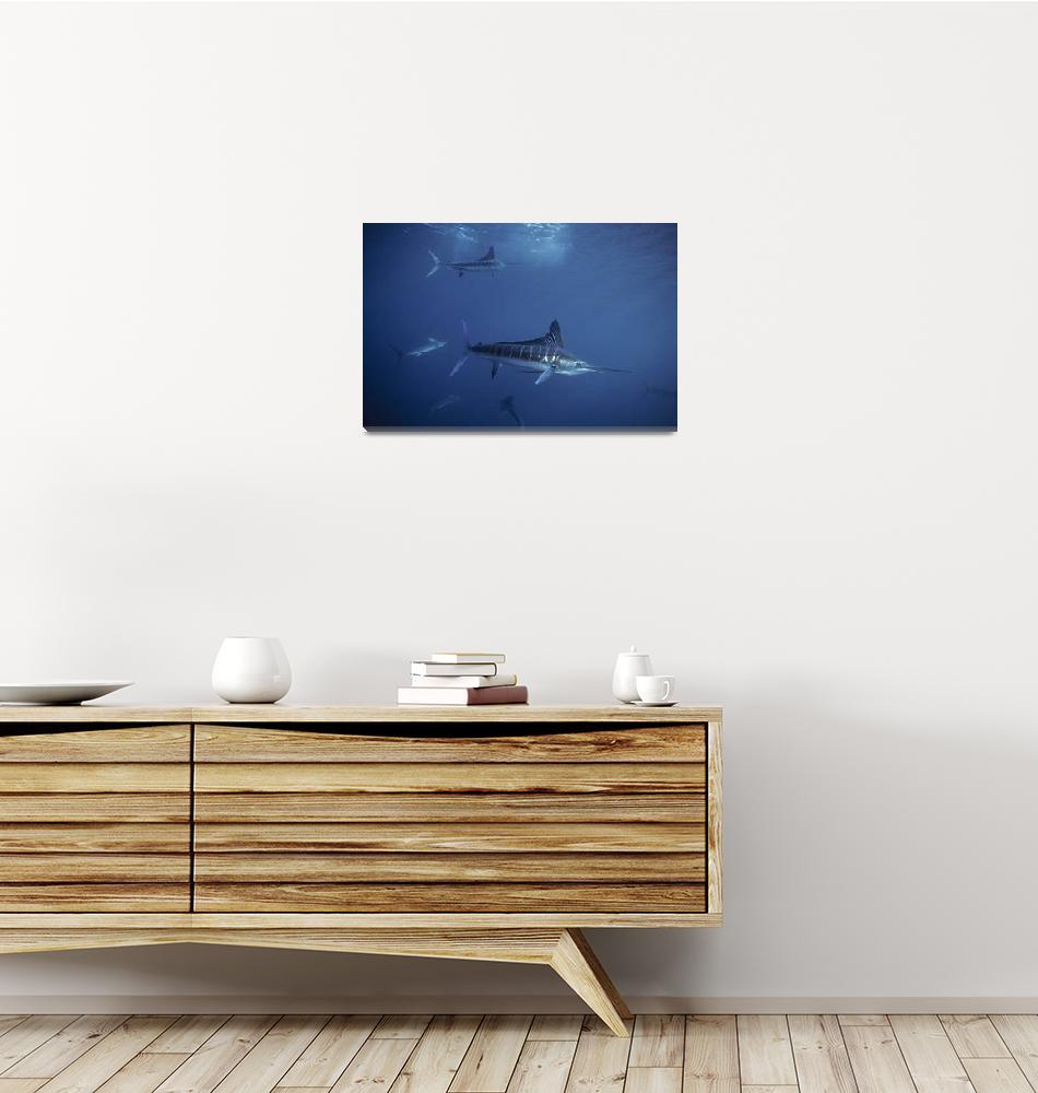 """Stripped Marlin 111295HF104""  by howardwesleyhall"