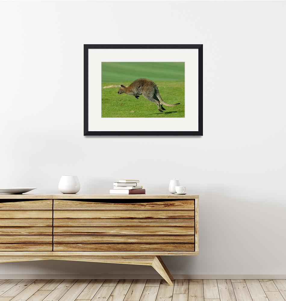 """""""Wallaby""""  (2011) by loversdream"""