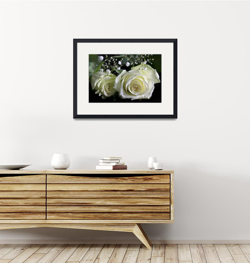 """""""White Roses""""  (2012) by Tracy2912"""