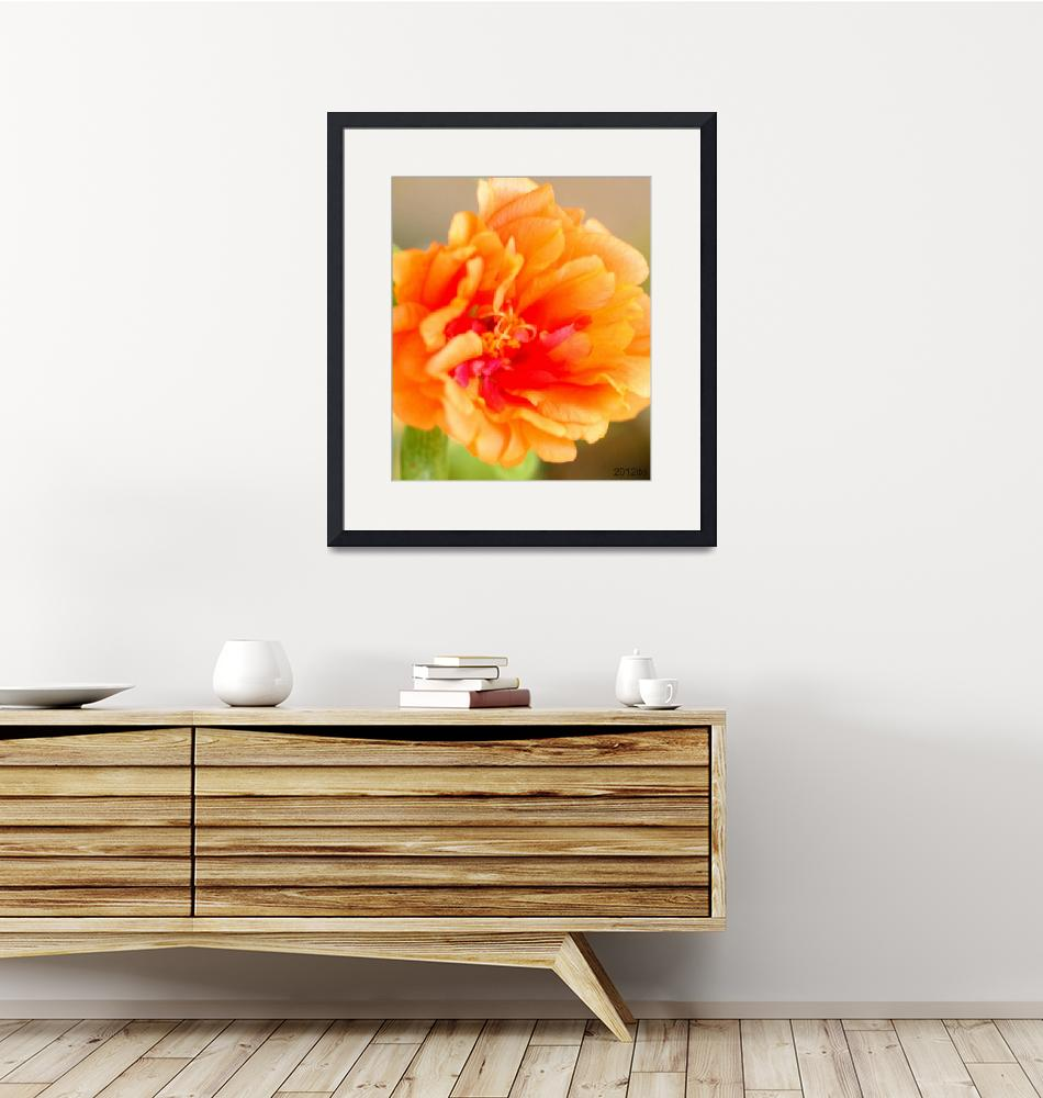 """Orange Portulaca Flower""  (2012) by lwunlimited"