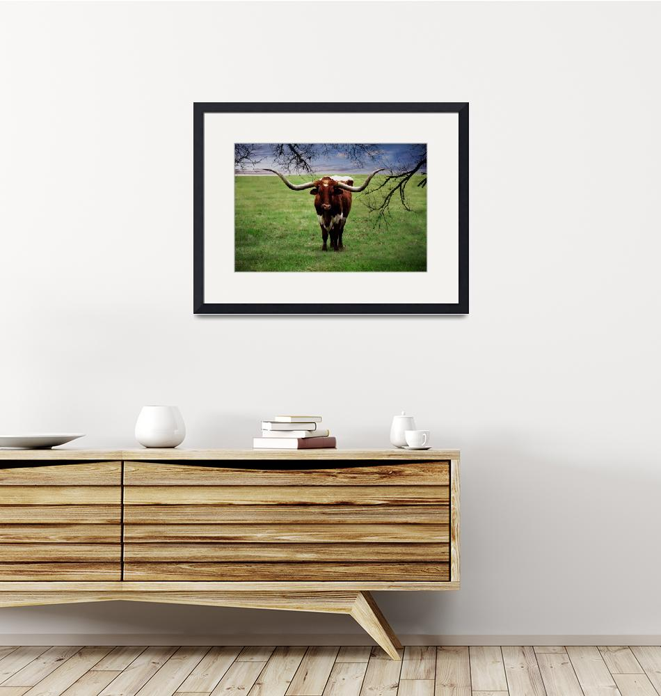 """Photo Texas Longhorn A5010816""  (2016) by MasArtStudio"