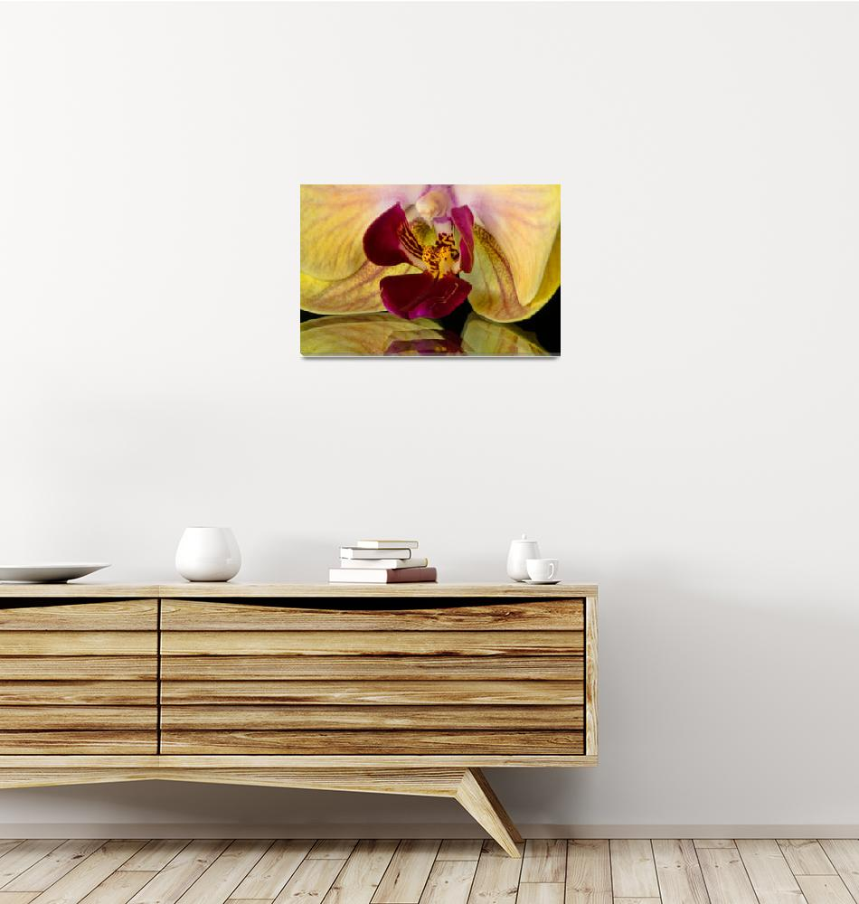 """""""Yellow Orchid""""  (2013) by boppintheblues"""
