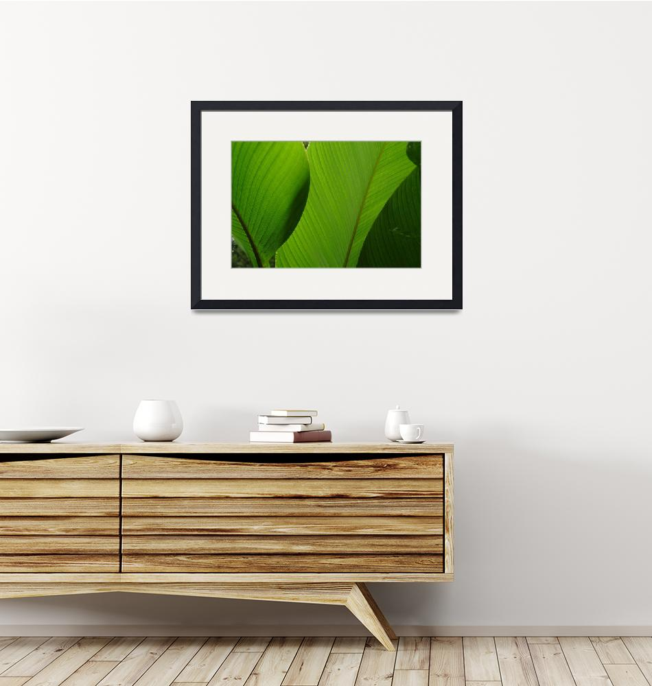 """""""Banana Leaves, Cloud Forest of Andes""""  (2003) by SederquistPhotography"""