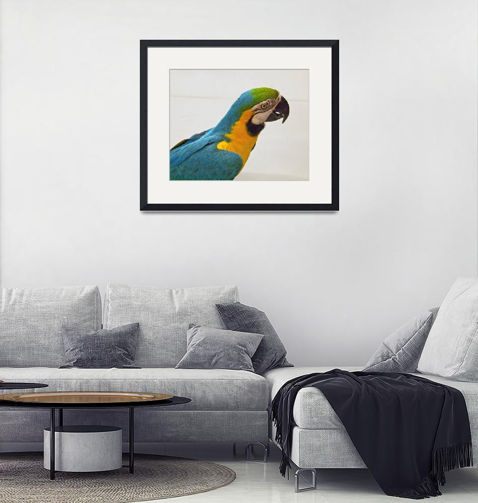 """""""Blue and Gold Macaw (1)""""  (2011) by janesprints"""