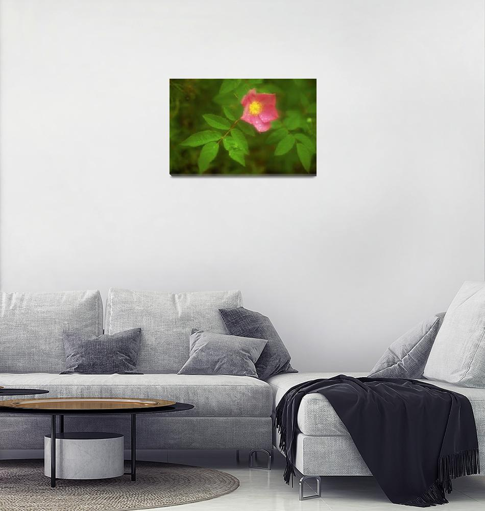 """Wild Rose of Alaska""  (1996) by ipsofactophoto"