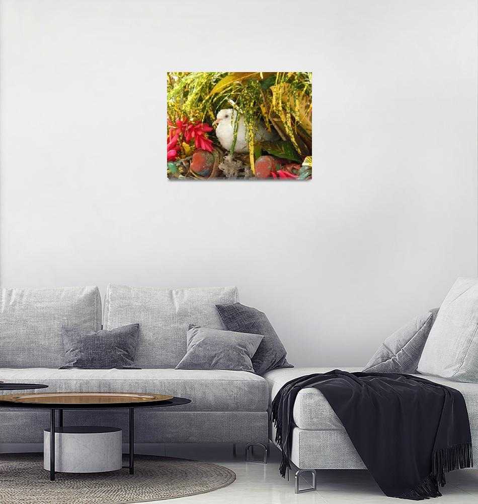"""White Dove in Jamaica""  (2011) by Shinecreativephotos"