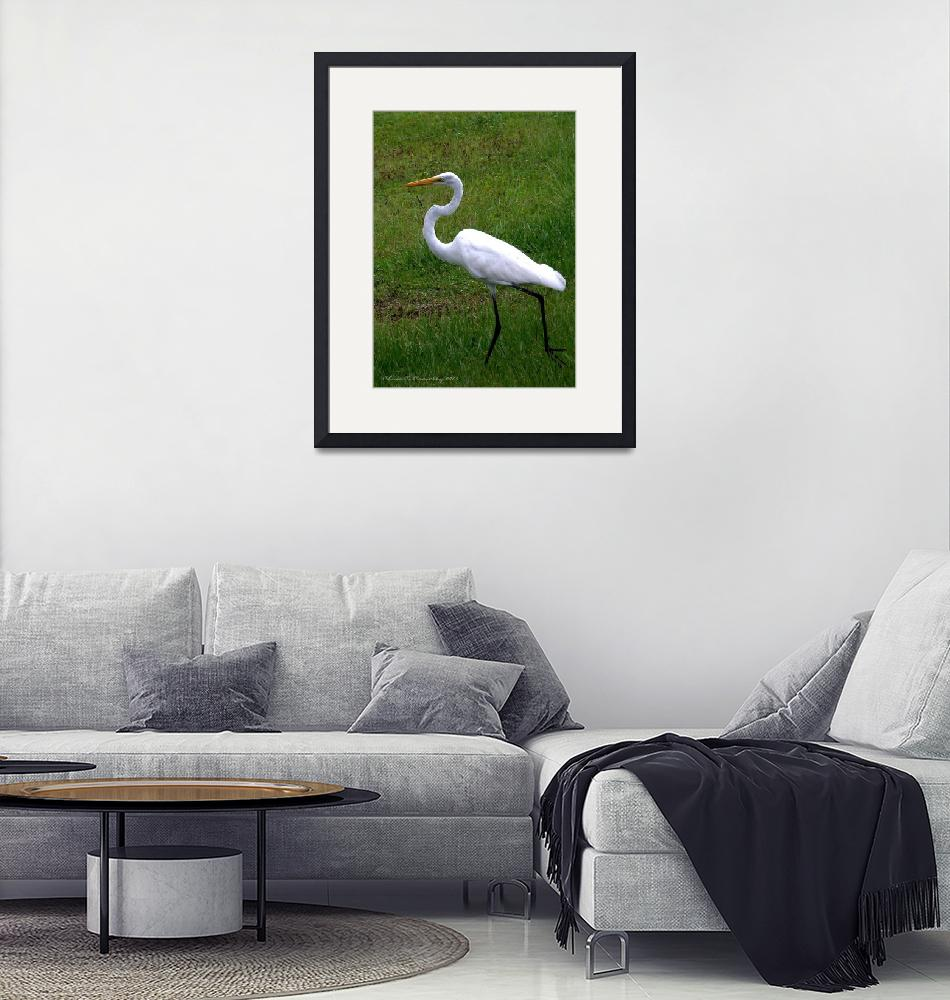 """""Great Egret On the Move""""  (2009) by ChrisCrowley"