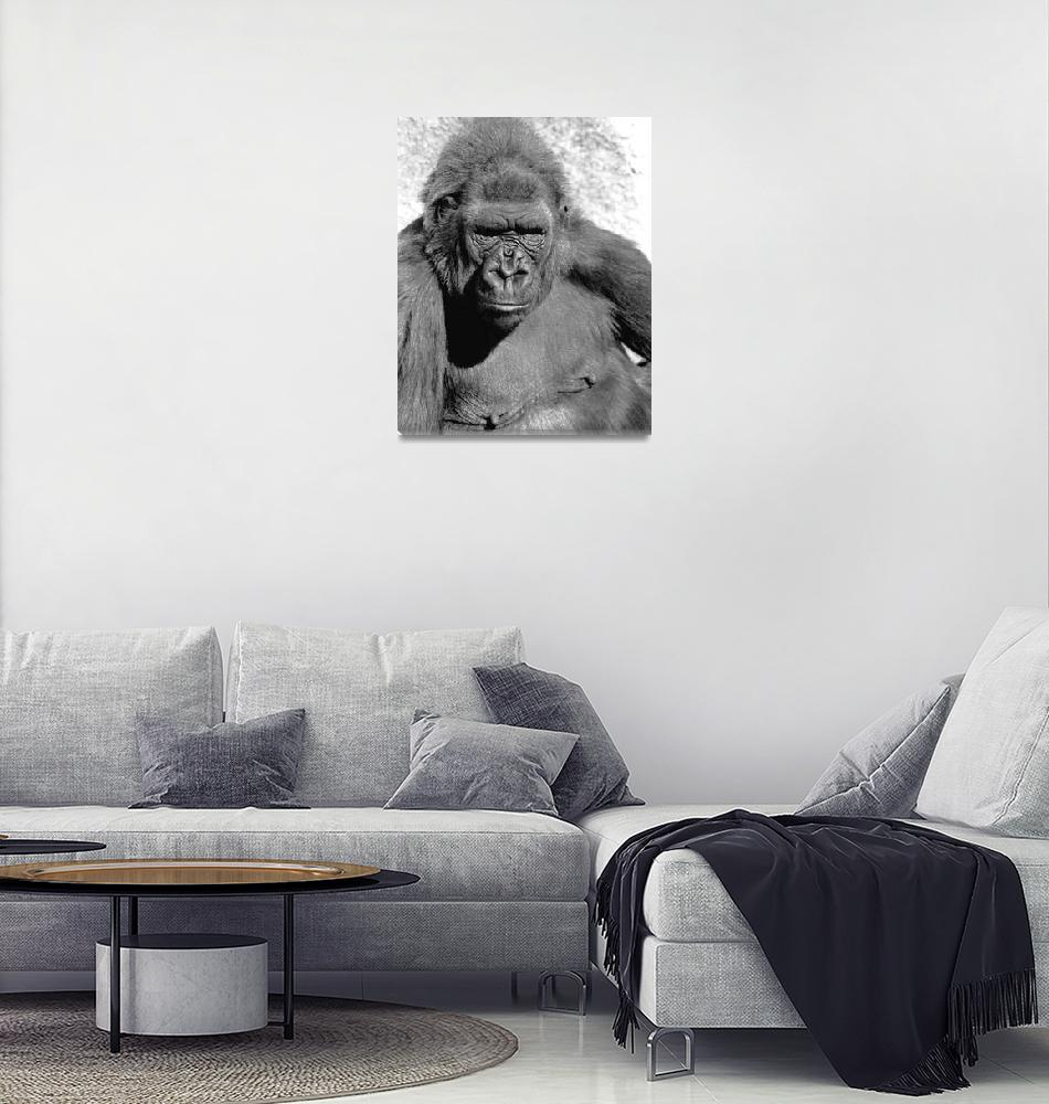 """""""Another Gorilla Female""""  (2008) by buffaloworks"""