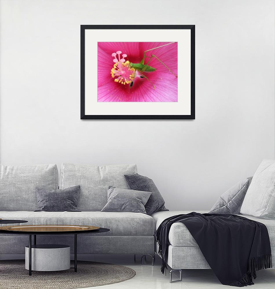 """""""Katydid on Pink Hibiscus Flower""""  (2008) by VickisNature"""