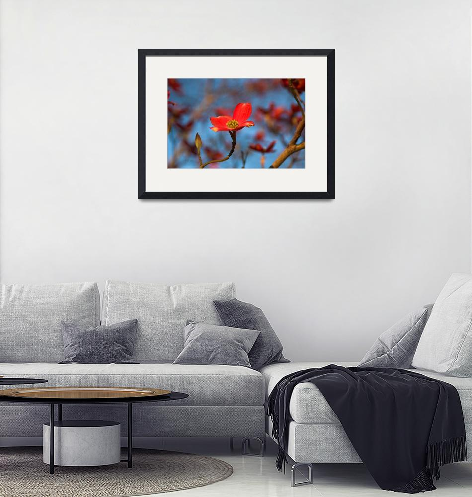 """""""Red Dogwood Bloom""""  by tricia"""