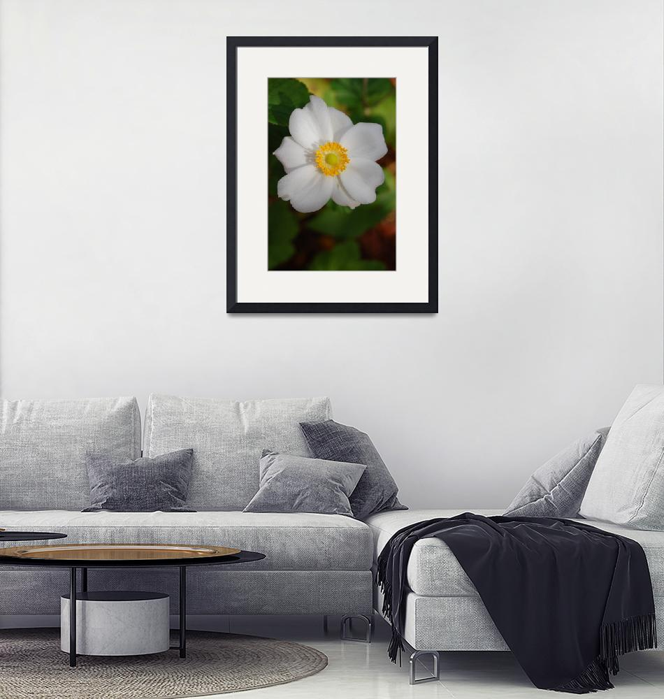 """""""Perfect Windflower""""  by printscharming"""