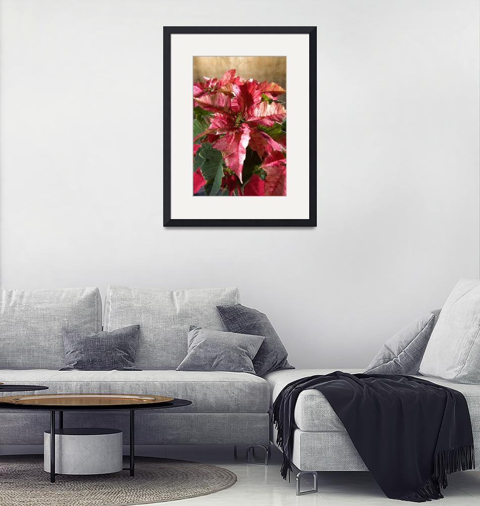 """""""poinsettia leaves""""  (2010) by cisfo"""