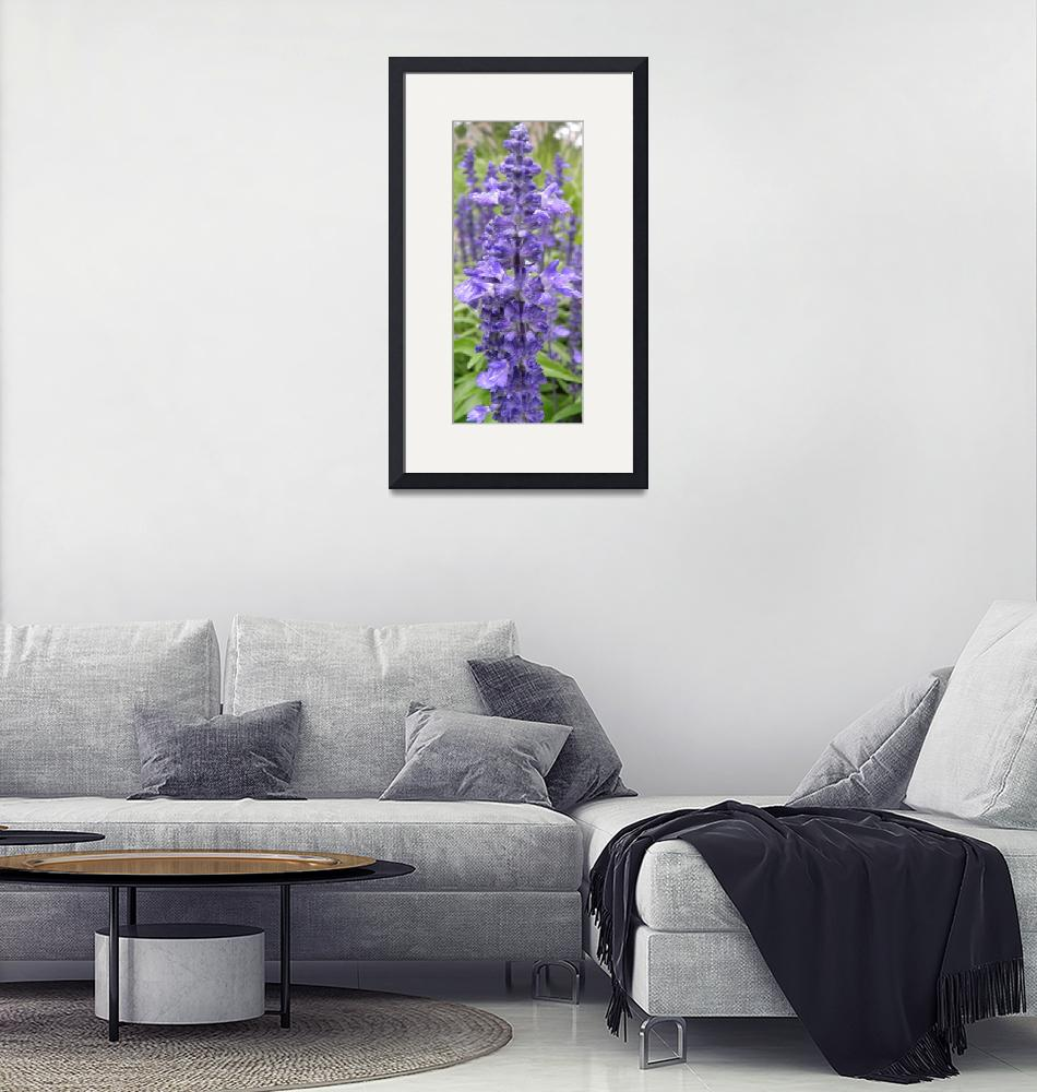 """cool purple flowers 1""  (2010) by sb1photography"