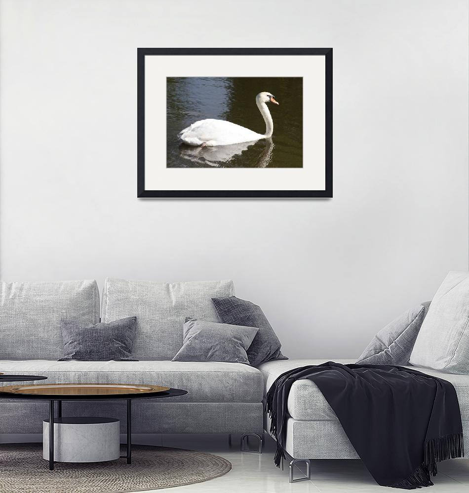 """White swan in pond""  (2012) by Albertphoto"
