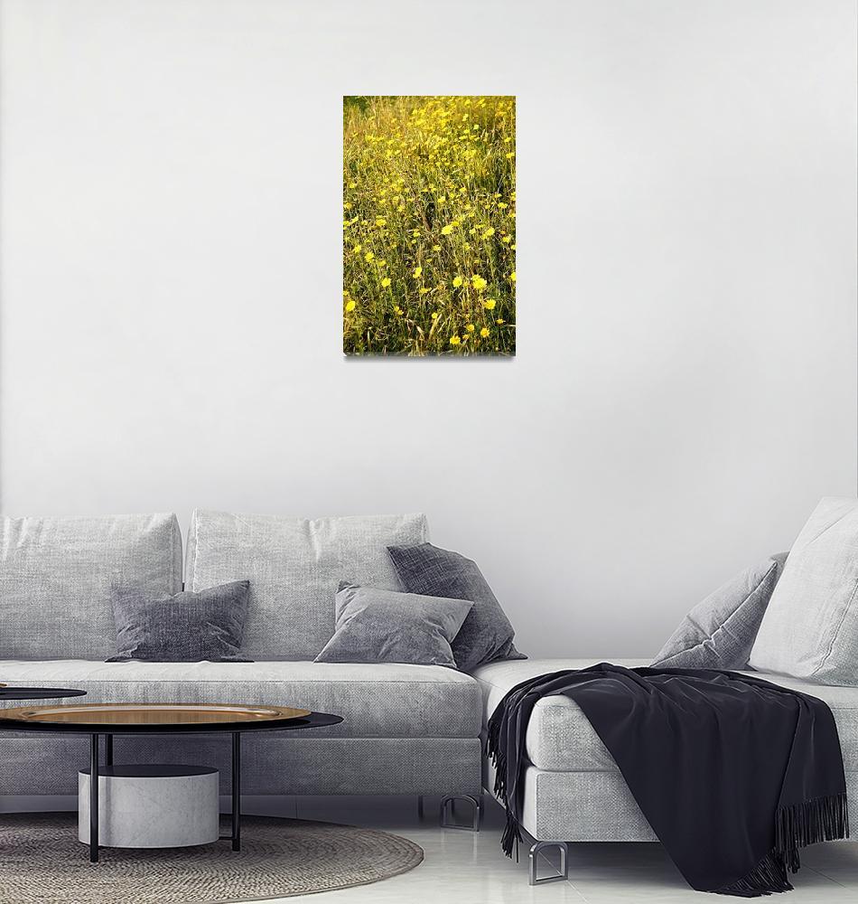 """Sunny Yellow Wildflowers of Lebanon 1132""  (2010) by rayjacque"