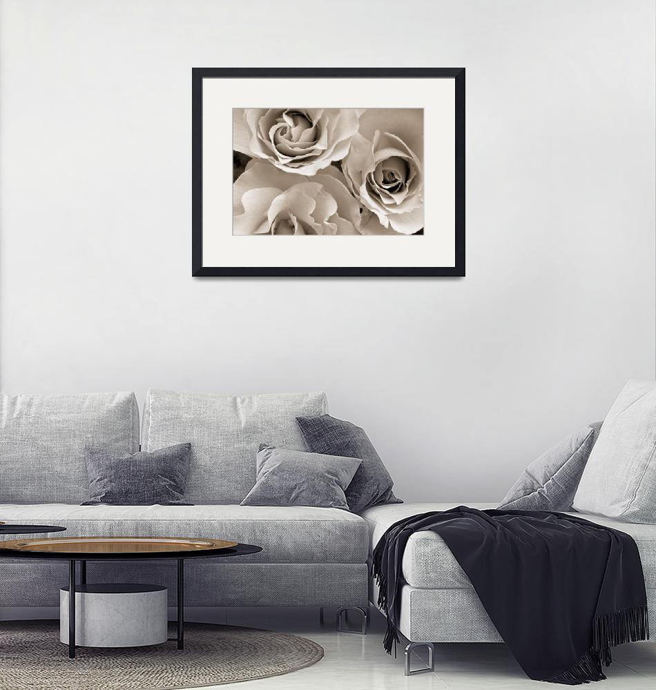 """""""Three White Roses""""  (2016) by cattanphoto"""