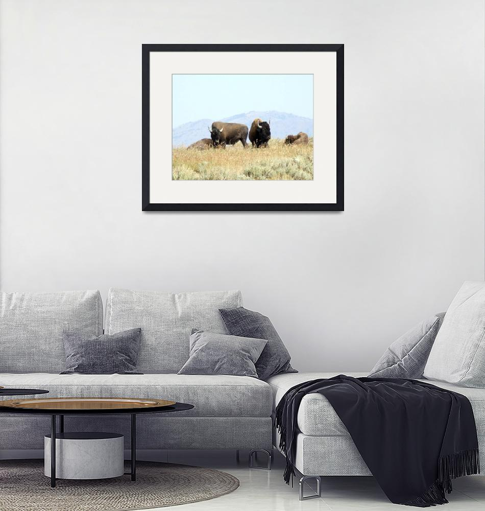 """""""Bison""""  by Hartphotography"""