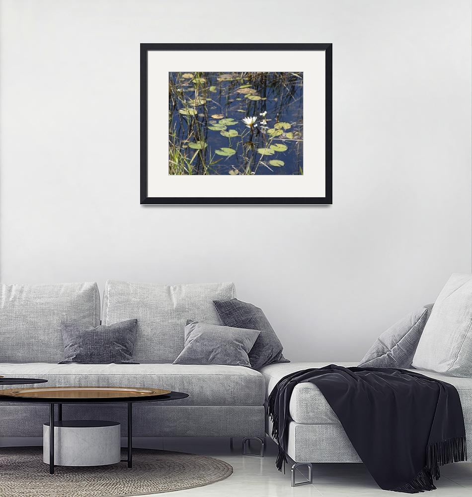 """""""Water-Lilies""""  (2016) by poleyland"""