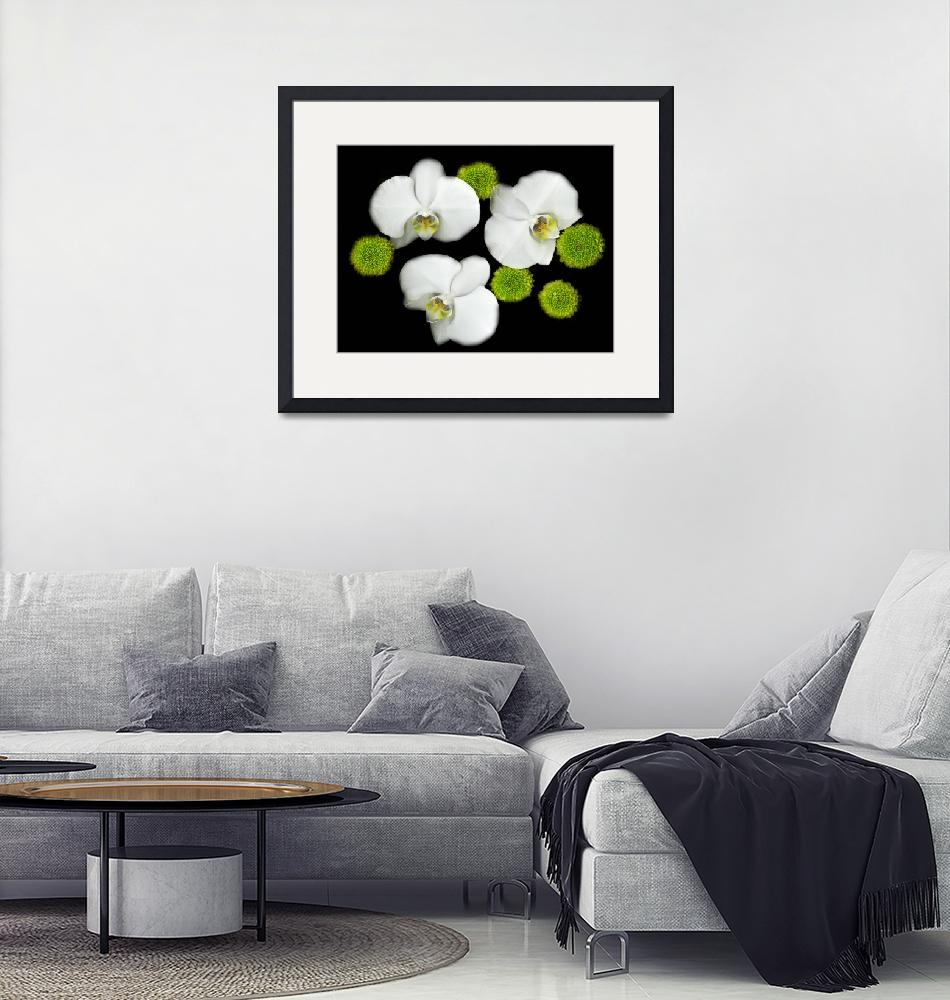 """""""white orchids original color photography""""  (2015) by modernhouseart"""