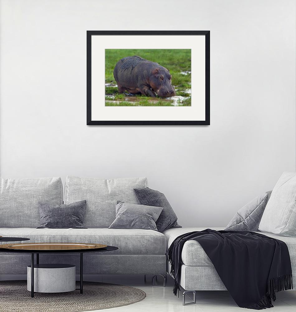 """""""Close-up of a hippopotamus""""  by Panoramic_Images"""