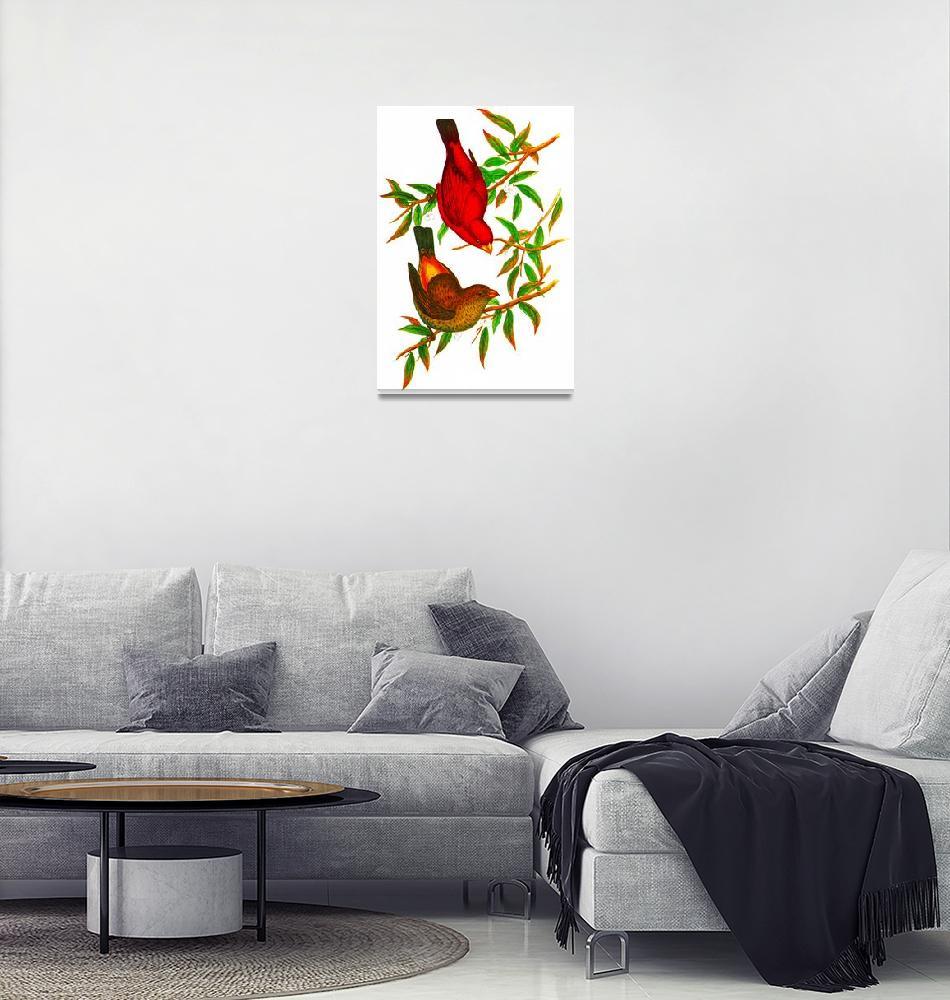 """Scarlet Finch""  (2009) by markkumurto"
