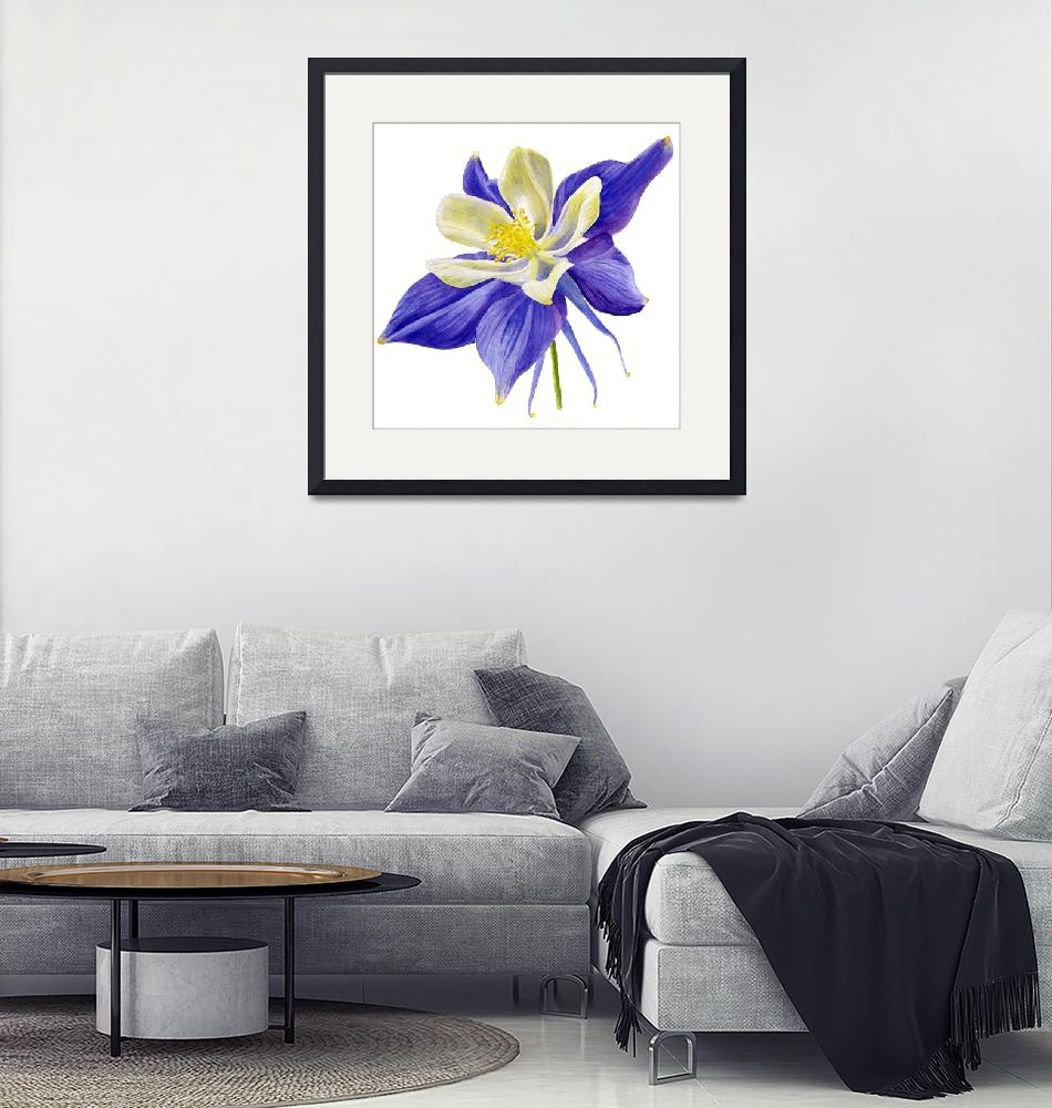 """""""Single Blue Columbine""""  (2015) by Pacific-NW-Watercolors"""
