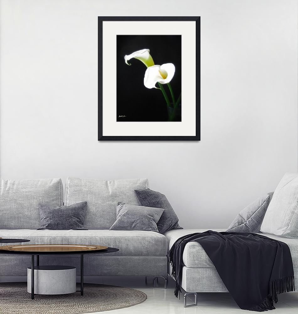 """Elegant Calla Lily Flowers 1""  (2011) by ChristopherInMexico"