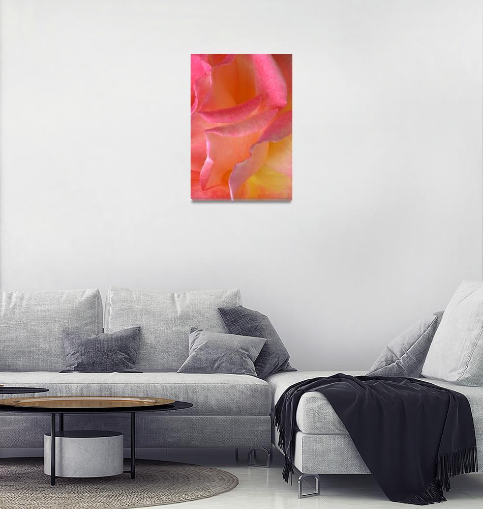 """""Hot Pink Yellow Rose 6"" #10070513""  (2013) by achimkrasenbrinkart"