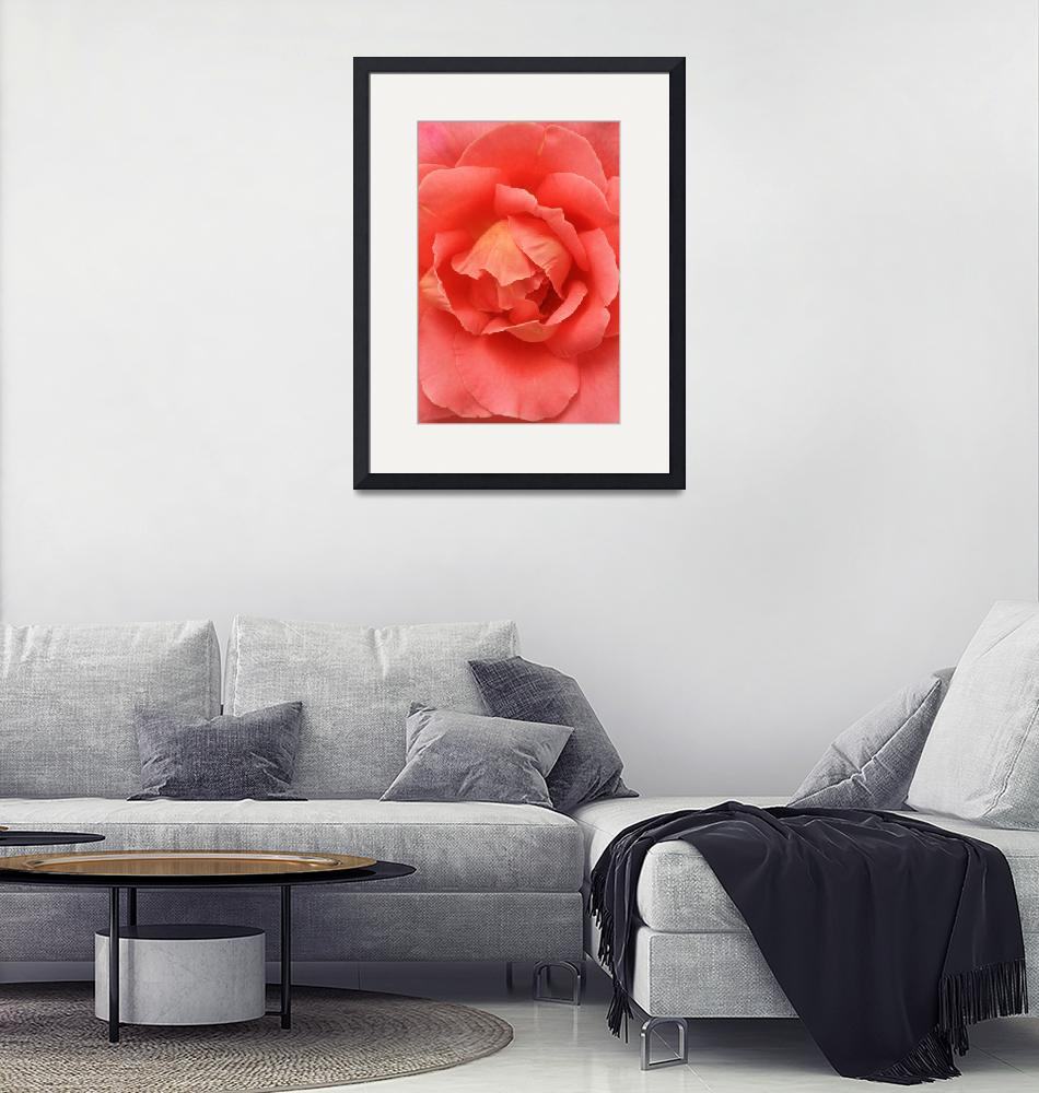 """""""Rose""""  (2012) by TabithaAnnPhotography"""