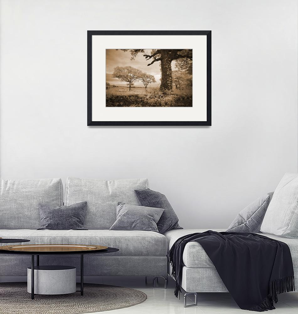 """""""Stories of Old - Infrared Trees Landscape""""  (2007) by miir"""