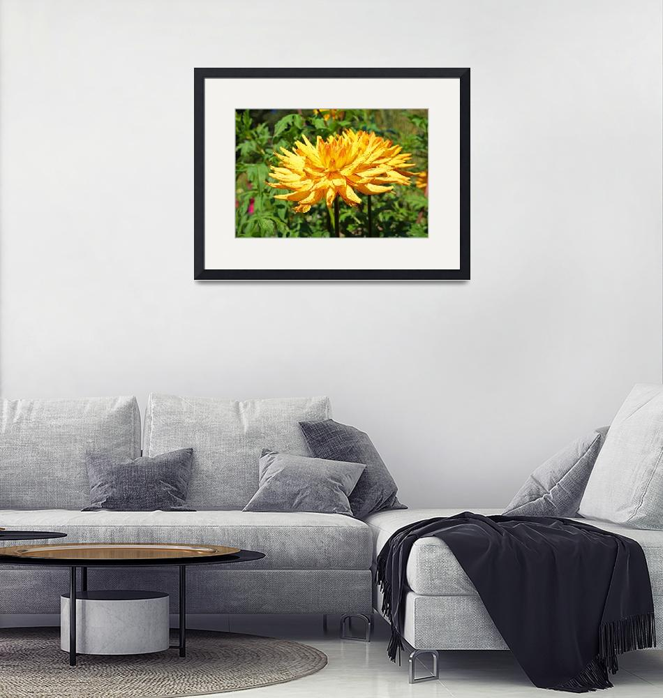 """""""Dahlia Flowers Art Prints Gifts Red Yellow Dahlias""""  (2016) by BasleeTroutman"""