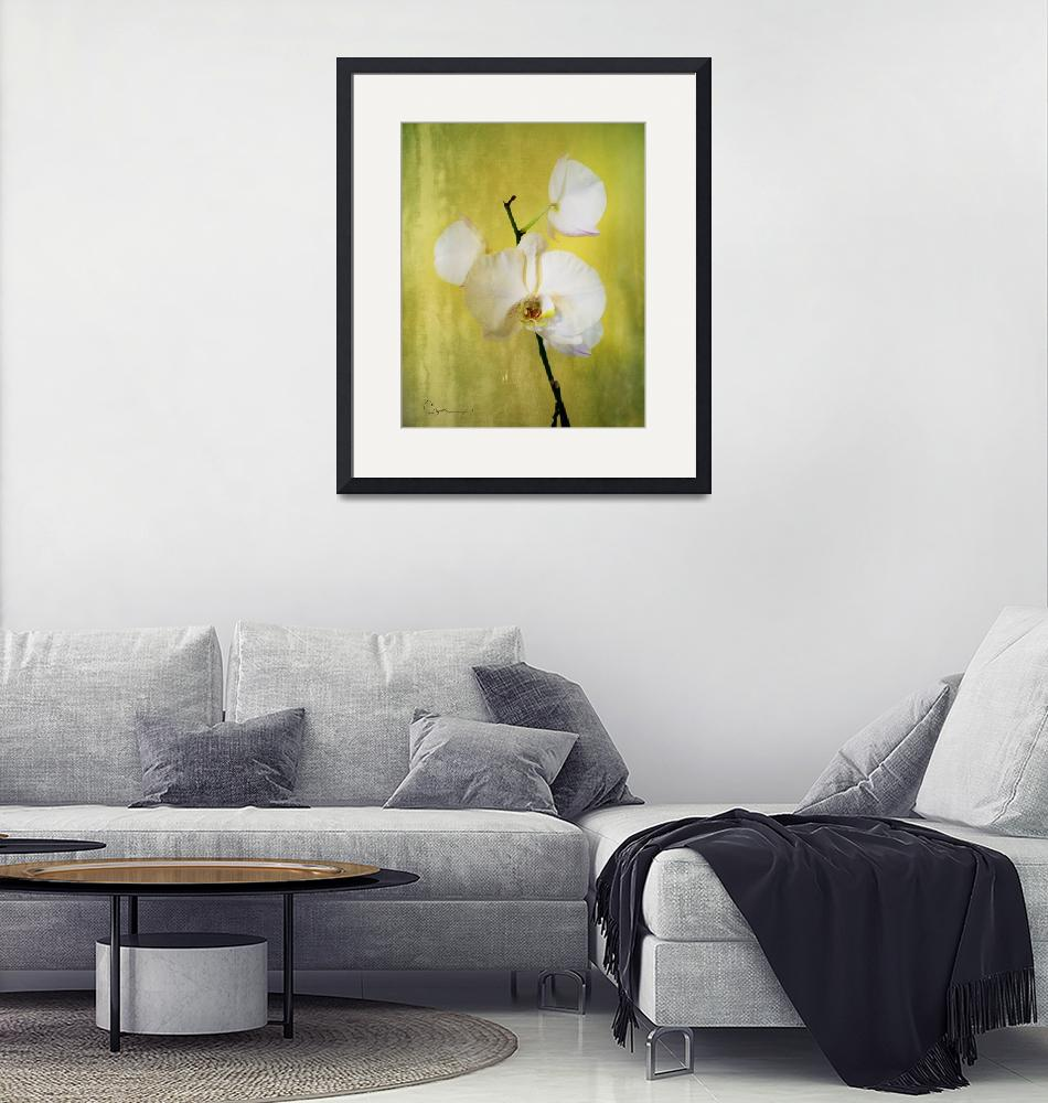 """""""Gold Orchid""""  by ellsworth"""