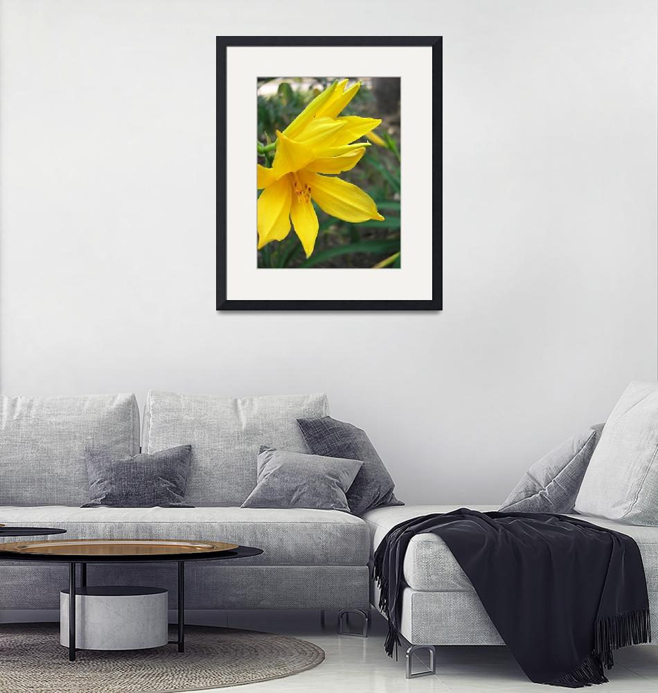 """""""Yellow Daylily 5""""  (2009) by ChristopherInMexico"""