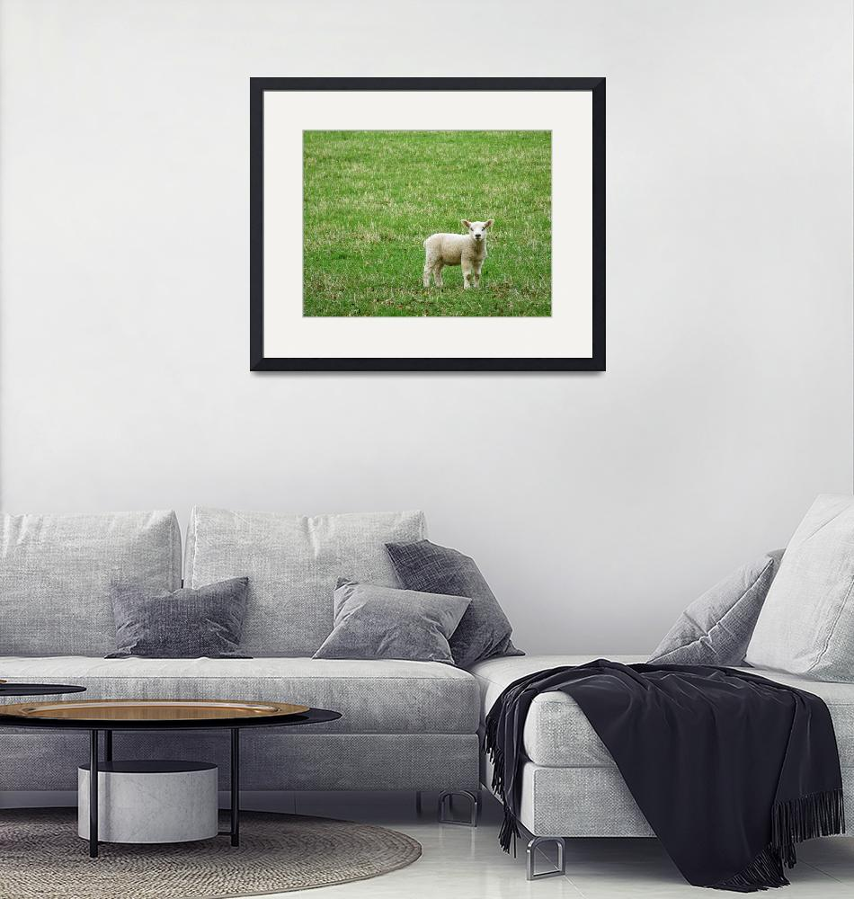 """Baby sheep""  (2008) by Julietart"